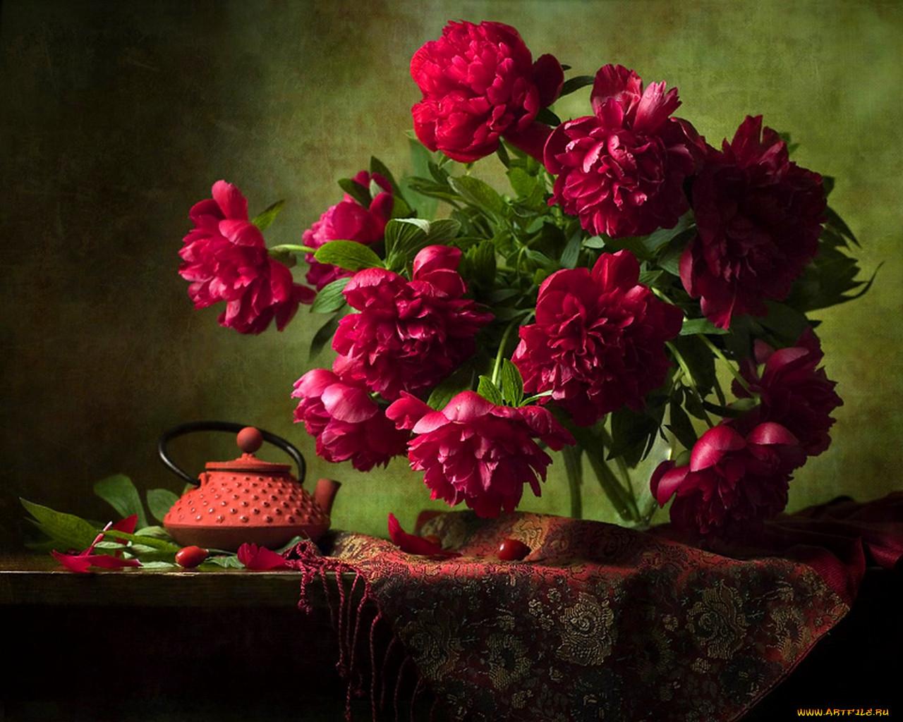 Цветы пионы обои для рабочего стола